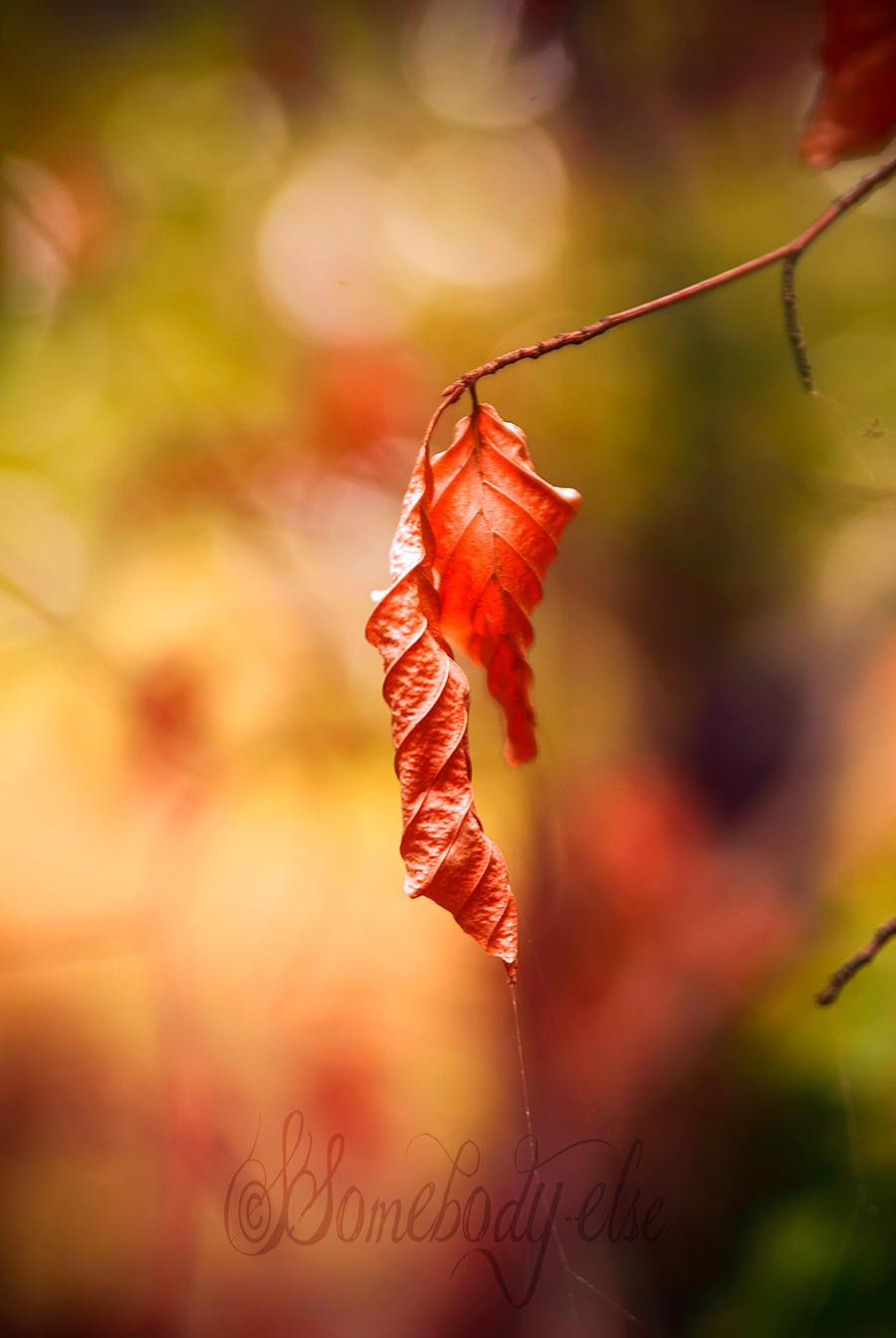Oranginisation des feuilles by Somebody--else