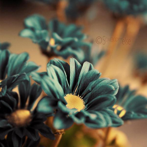 Fleur Bleue by Somebody--else