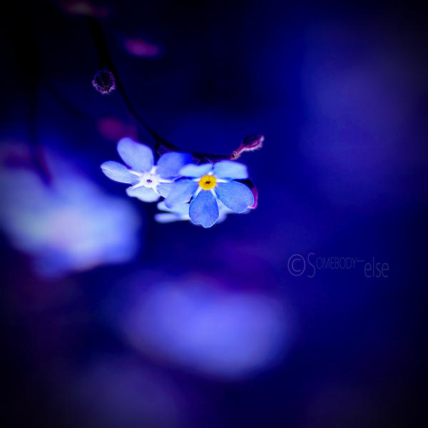 ForgetMeNot. by Somebody--else