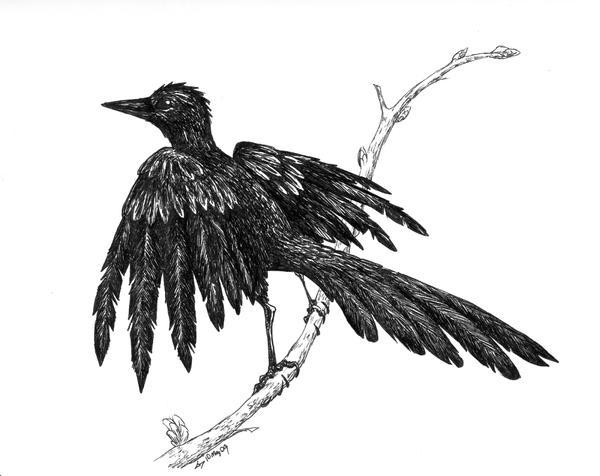 Wet Bird by Pteryxx