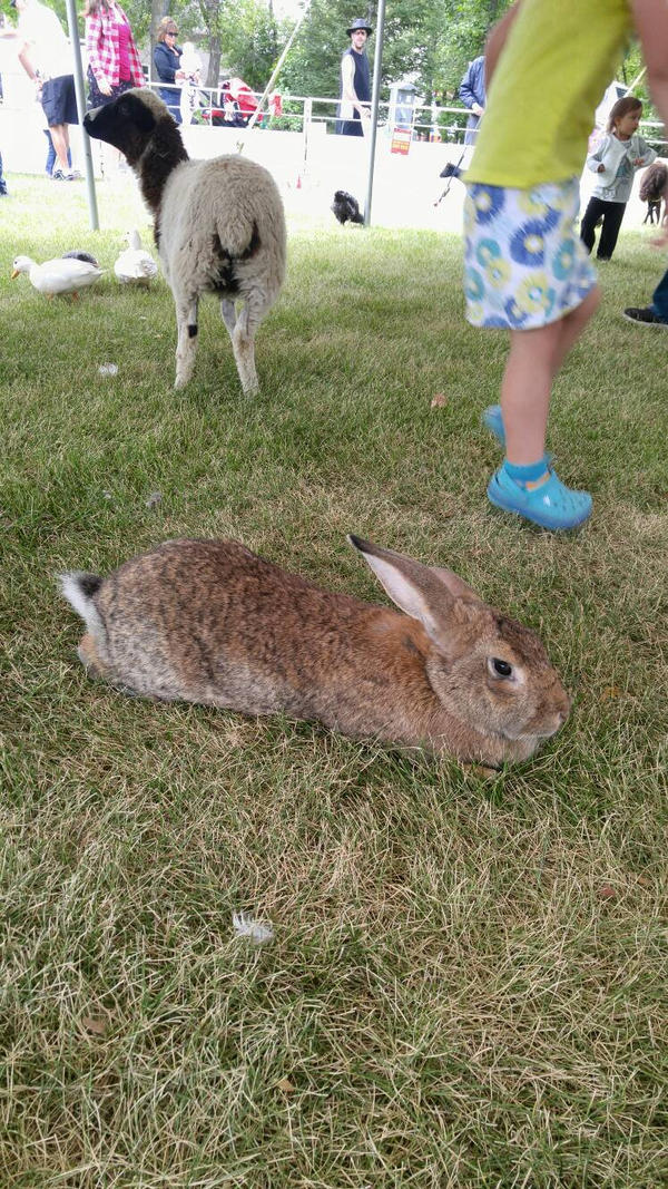 big rabbit by MyLoveForYouEternity