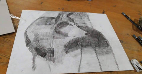 wolf sketch and shading