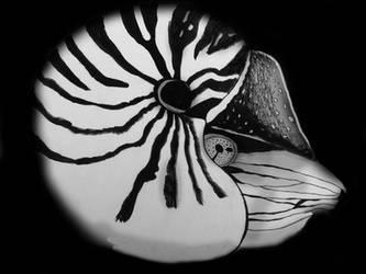Drifting Nautilus