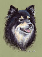 Finnish Lapphund by asbolos