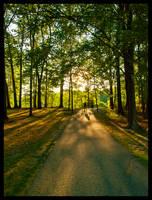 Sunlit Path by JohnKyo