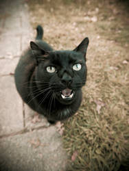 Meow Meow by JohnKyo