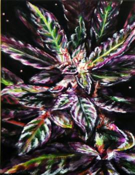 Purple Kush by akinomicon