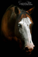 Bleau in his stall by zeeplease