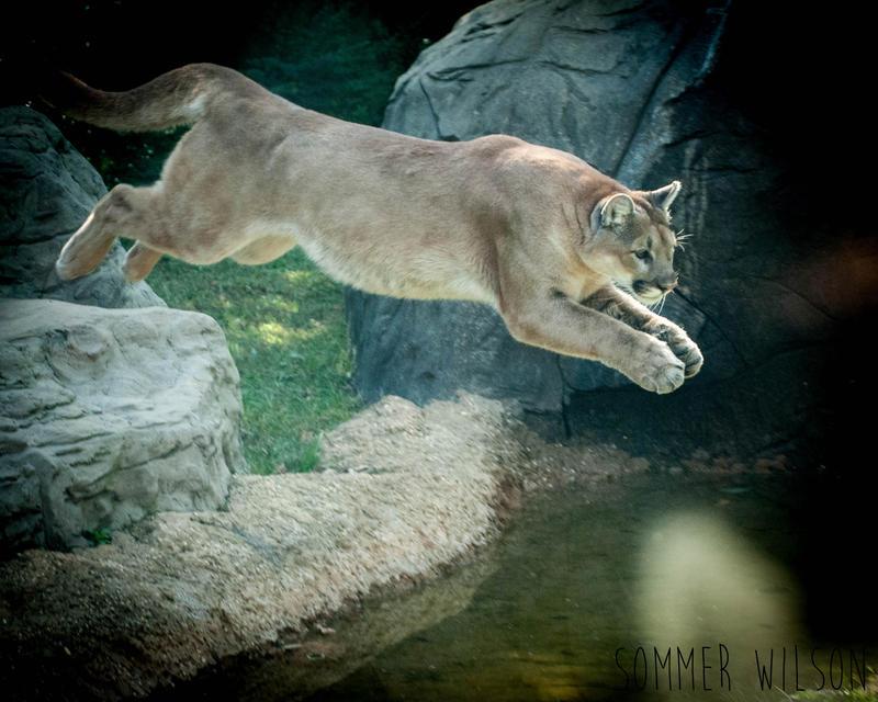 Chattanooga Zoo by zeeplease