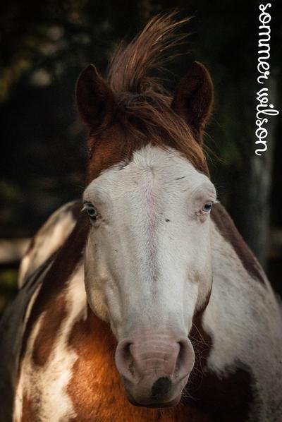 The majestic unicorn by zeeplease