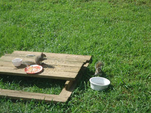 squirrels and bird feeders (day 3)