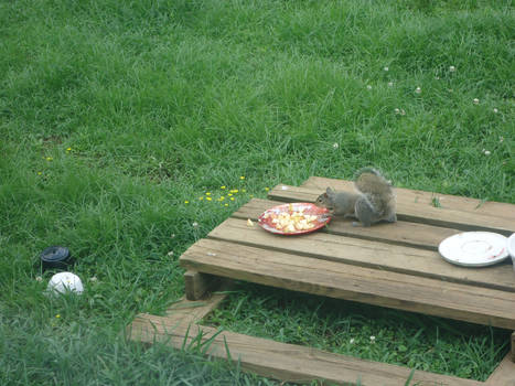 squirrels and bird feeders (day 7)