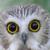 Owl emote by lacymooo