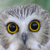 Owl emote