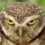 Owl Emote 2