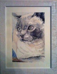 Bianca_Tash_cat