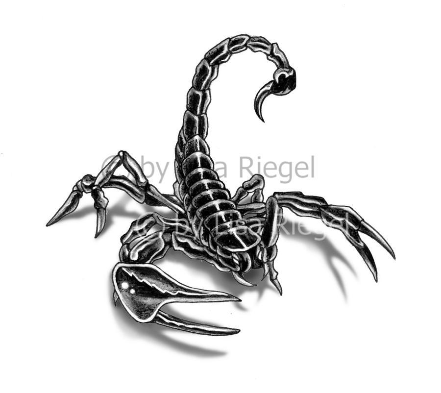 Skorpion By Mietzenpfote On Deviantart