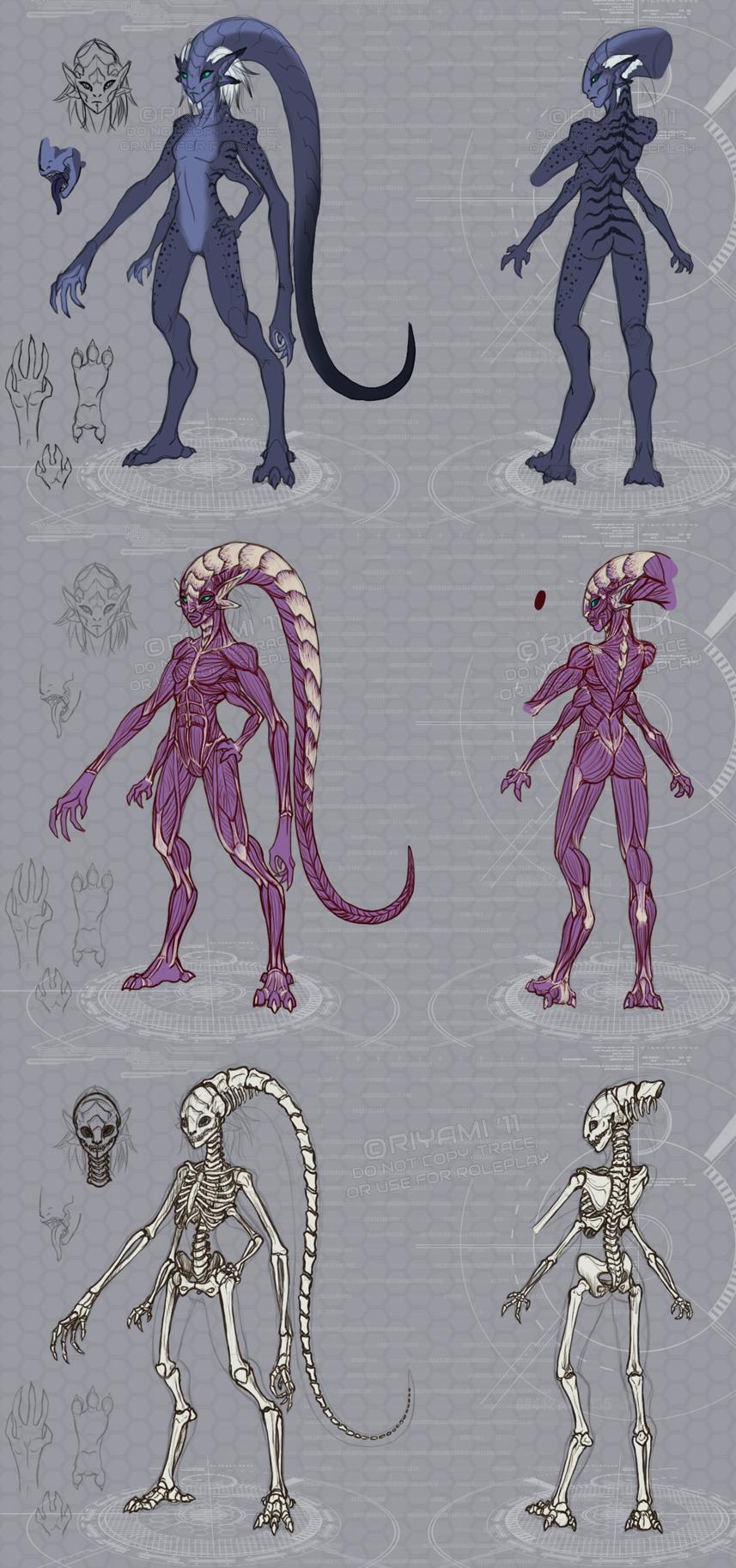 Veera anatomy study by Riyami