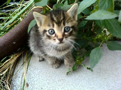 Antisocial As A Kitten by BleedTheFreak6511