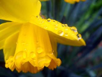 Just another rainy day.. by Nerina-Nerina