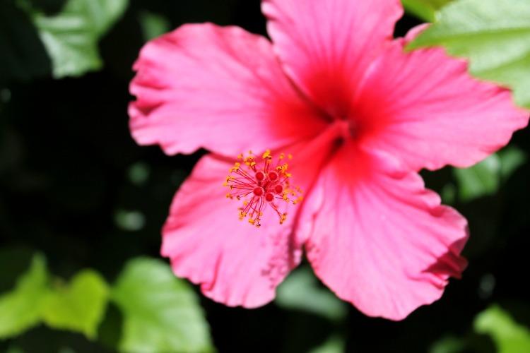 Pink Lily by Nerina-Nerina on deviantART