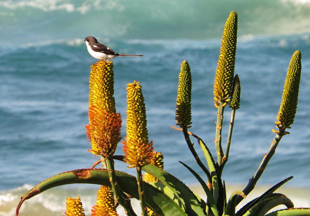 Sagabula-on-aloe-flower by fotoponono
