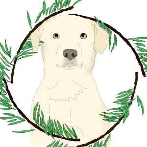 ivory-dog's Profile Picture