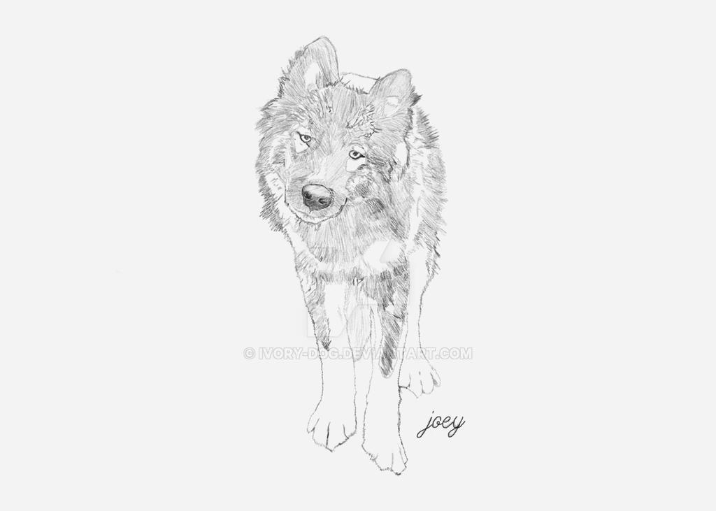 Joey the Husky by ivory-dog