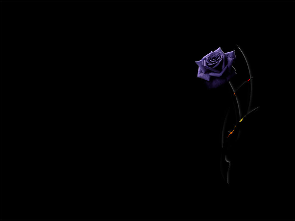 Background purple rose...