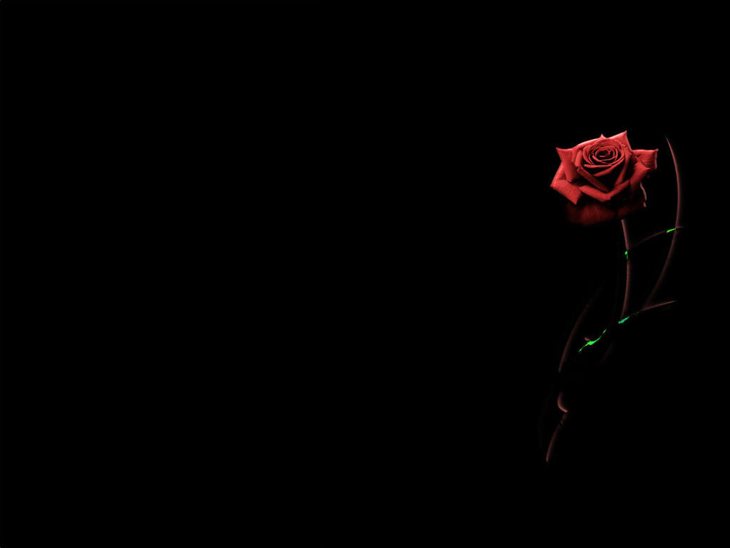 Background Red rose by H-ansa on DeviantArt