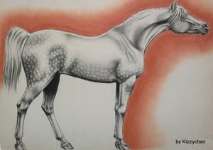 Arabian dapple