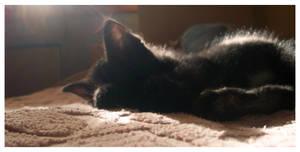 cat sleep by Tamika91