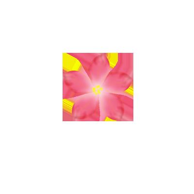Pink Flower PNG 400372156 on Tumblr Transparent Flowers Rose