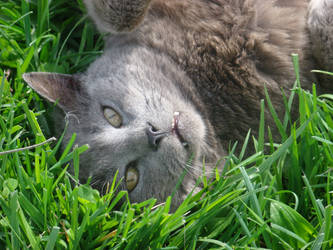 Kitty Bliss by poeticnobody