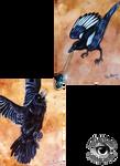 Magpie vs Raven
