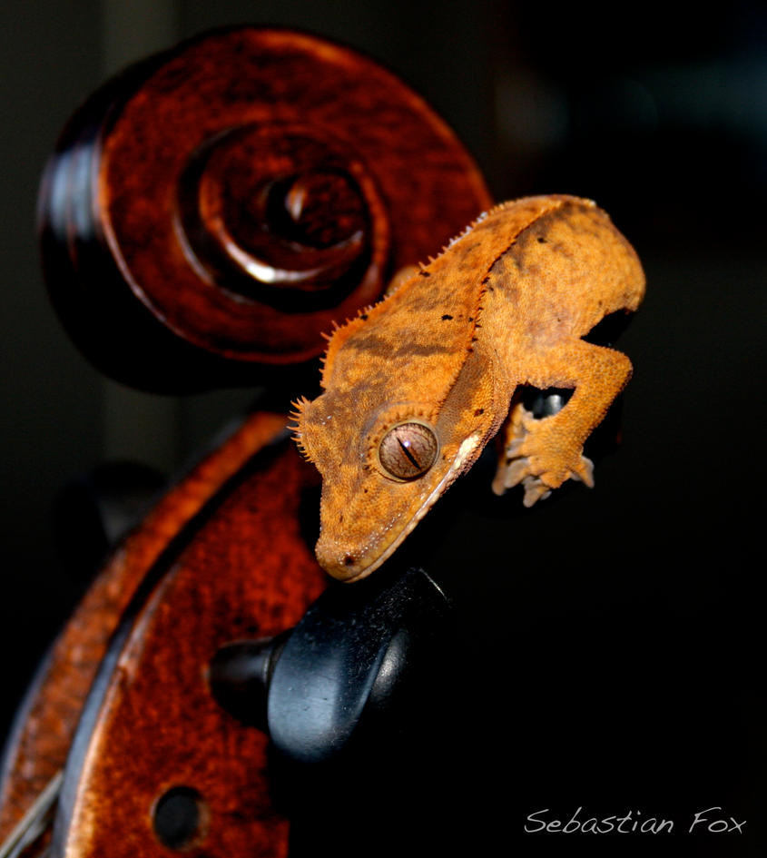 Gecko on the Fiddle by MadSebby