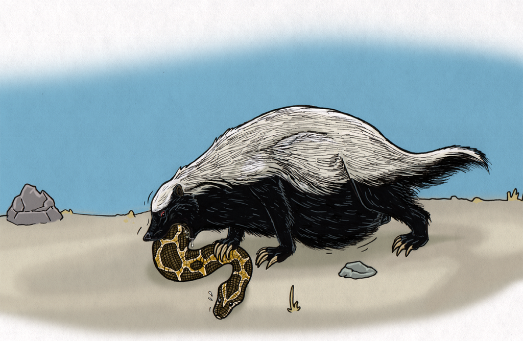 Ratel and python by Greedywoozle