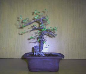 Ulmus parvifolia 01-02-2009