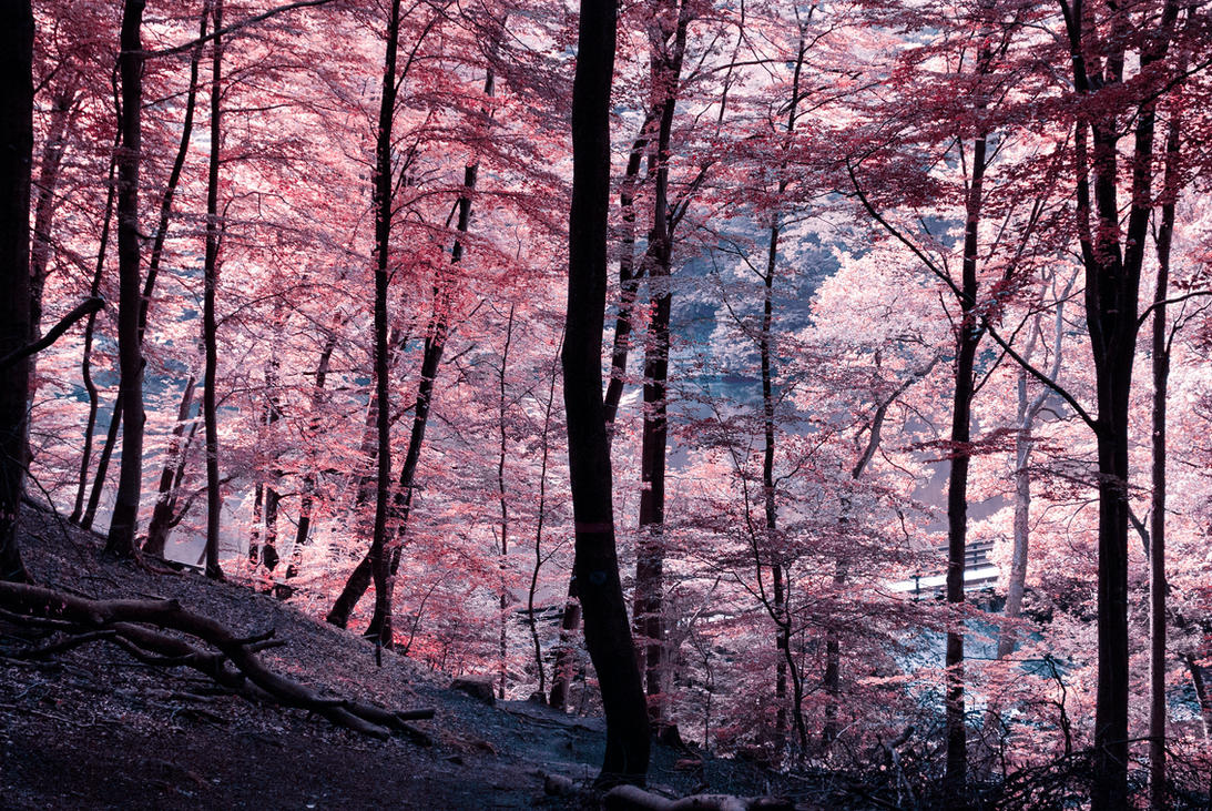 Efflorescence by MichaelaV