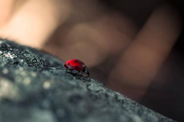 Ladybug II by MichaelaV