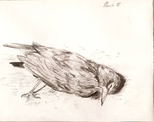 dead bird by arcthelove