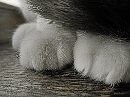 Paws and a Tail by jena4renna