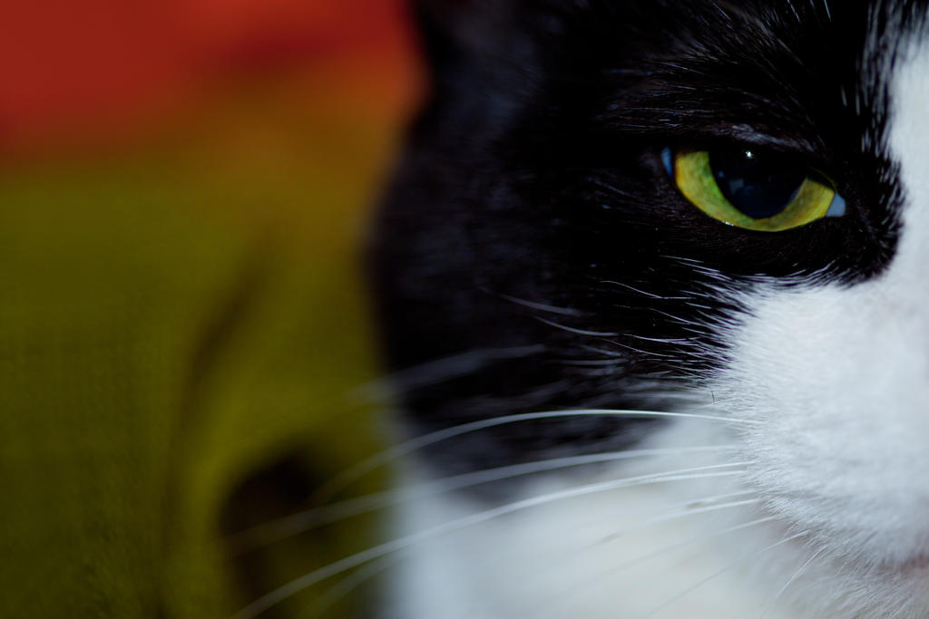 cat's Eye by GregoryDemchenko