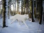 Wolf Runner