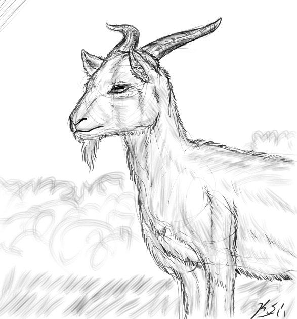 Goat Realism Sketch By The Clockwork Crow