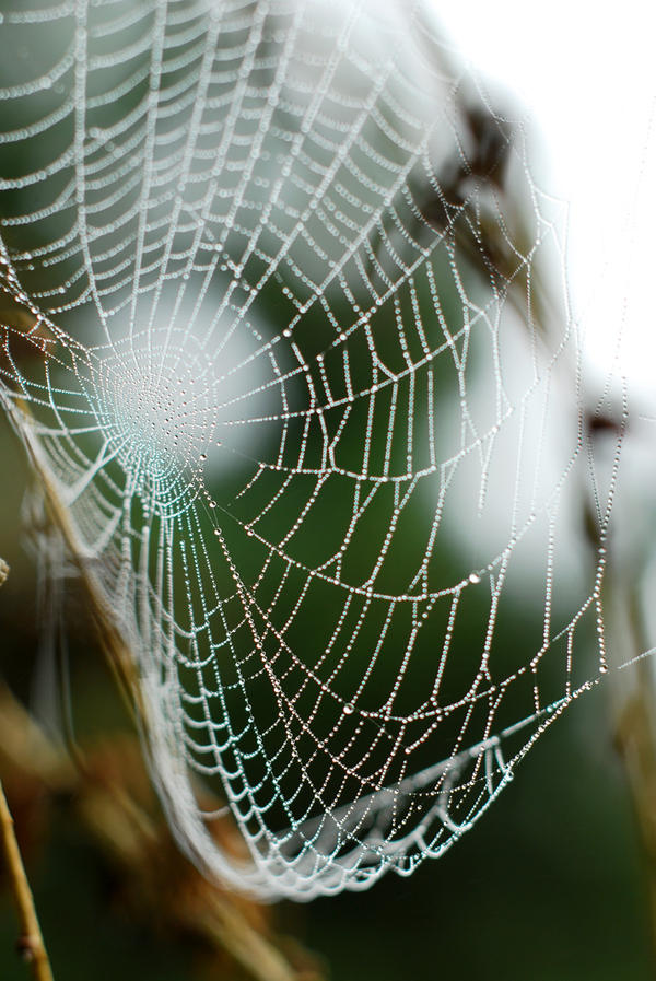 Kapljice vode - Page 31 Spider_net_with_water_drops_by_smileyg-d2zpot0