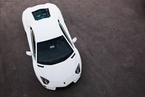 White bull by Lambo8
