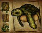 Liek Turtles