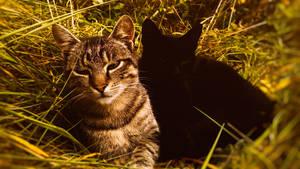 Lazy kitties