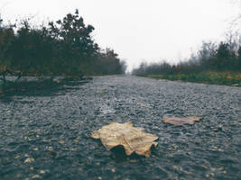 A Leaf In The Rain. by Activvv